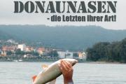 Donaunasen – die Letzten ihrer Art!